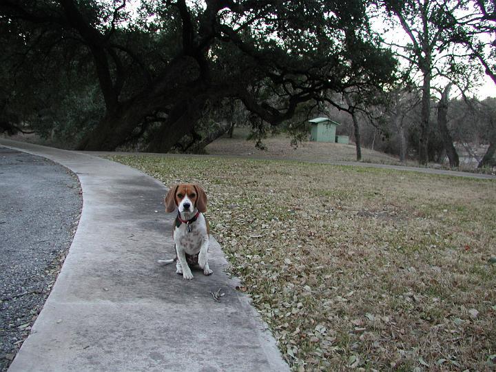 Bailey 2003